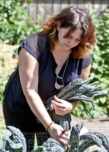 t082415 --- Clint Austin --- austinHUMMUSDESIGN0831c3--- Jenn Rodgers of Duluth harvests kale from a garden at her home Tuesday afternoon. She uses the kale in hummus that she makes and sells at Whole Foods Co-op. (Clint Austin / caustin@duluthnews.com) LEAD PHOTO