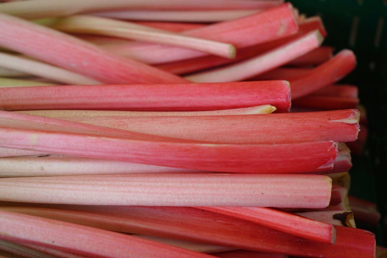 rhubarb-318217_1920